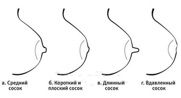 Различные формы сосков у девушек