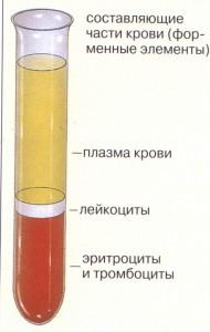 Богатая тромбоцитами плазма как получить